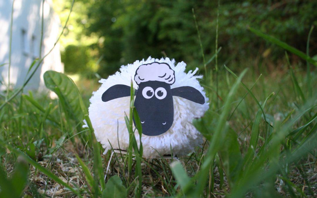 Bommel-Schaf